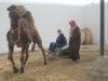 Tunisie 12.2008 047a